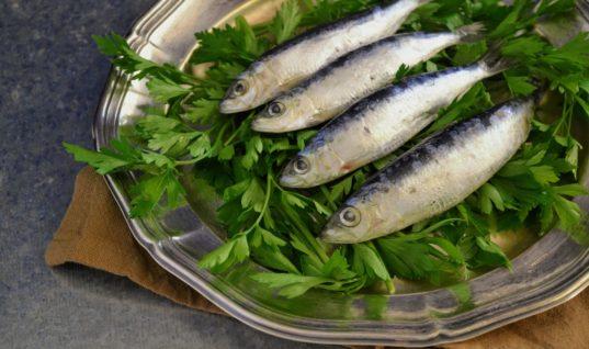 «Δημιουργική ελληνική κουζίνα σε ψάρια και θαλασσινά»