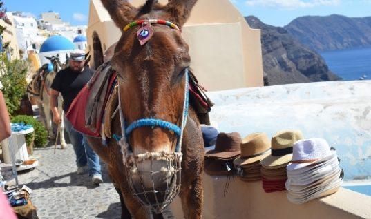 Σαντορίνη: Τέλος η μεταφορά υπέρβαρων τουριστών με γαϊδουράκια